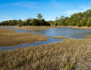 pinckney island wildlife reserve beautiful landscapes