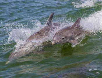 dolphins swimming in the sea