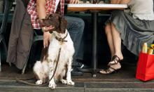 couple eating outside with dog at restaurant