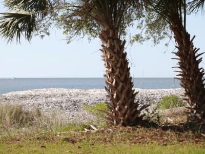 daufuskie island sc palm trees