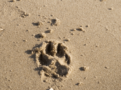 dog pawprint in the sand