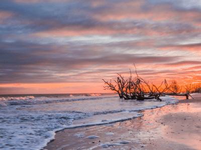 Edisto Beach Tree Fog Water