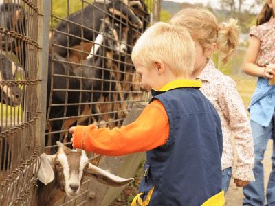 kids at petting zoo